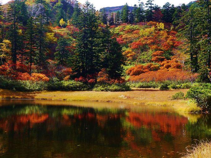日本最大の国立公園「大雪山国立公園」で大自然を満喫しよう