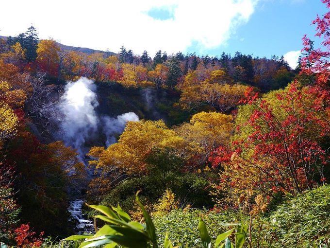 「大雪高原沼めぐり」では、錦織り成す紅葉の森を歩く