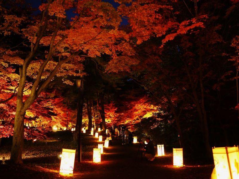 秋の夜に輝くもみじ!埼玉・武蔵丘陵森林公園「紅葉見ナイト」