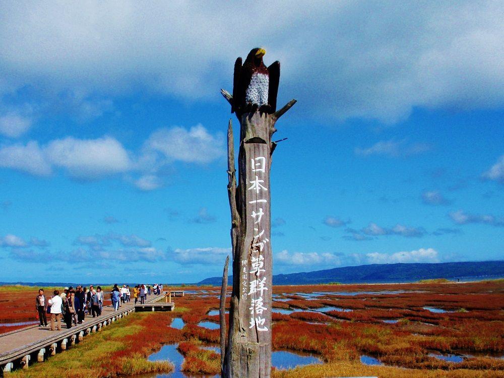 能取湖卯原内(のとろこうばらない)のサンゴ草群落地