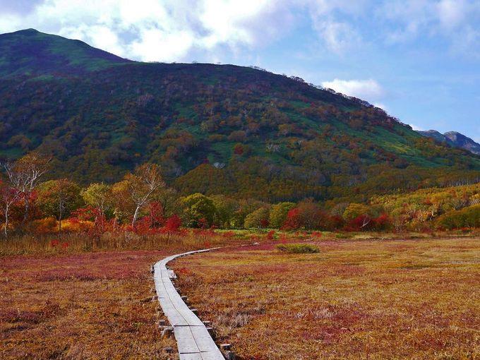 木道から眺める錦色の湿原