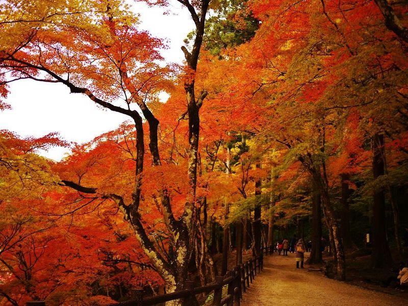 絢爛豪華!真っ赤に染まる絶景紅葉スポット!豊田市「香嵐渓」