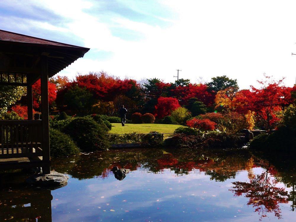 日本庭園の眺め