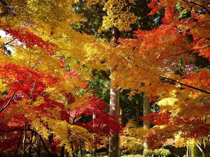 日本紅葉の名所100選にも選ばれる、美しい「湖東三山」の秋