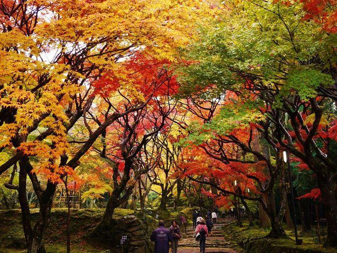 紅葉と苔生す境内が美しい「西明寺」