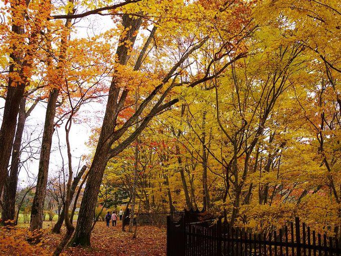 「滝の上公園」は、遊歩道からも美しい紅葉を楽しめます