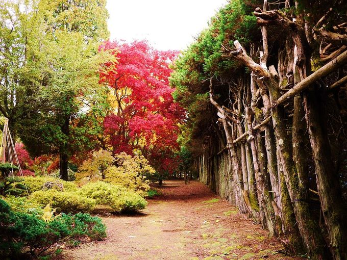 「東庭園」の周囲はヒバの垣根が続きます