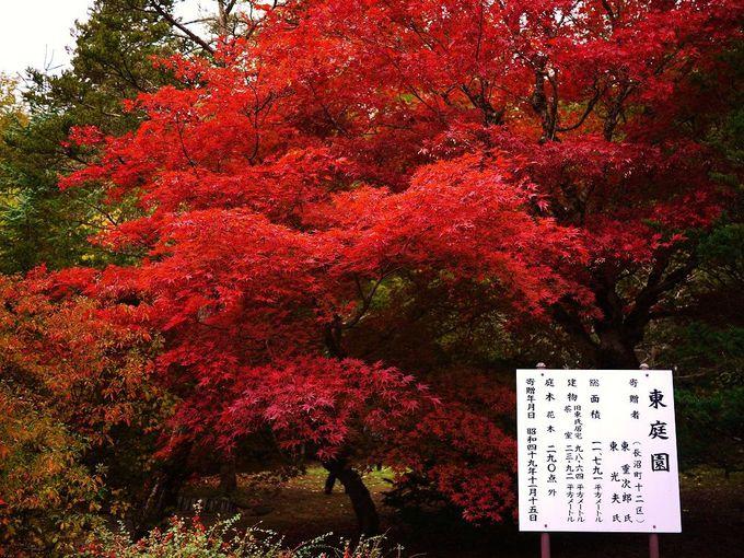 秋の主役は深紅の紅葉!