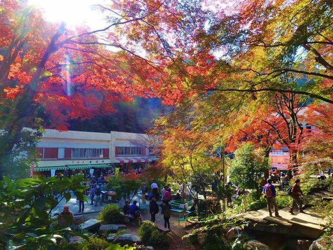 移動方法は3種類、美しい紅葉の世界を楽しむには徒歩がオススメ