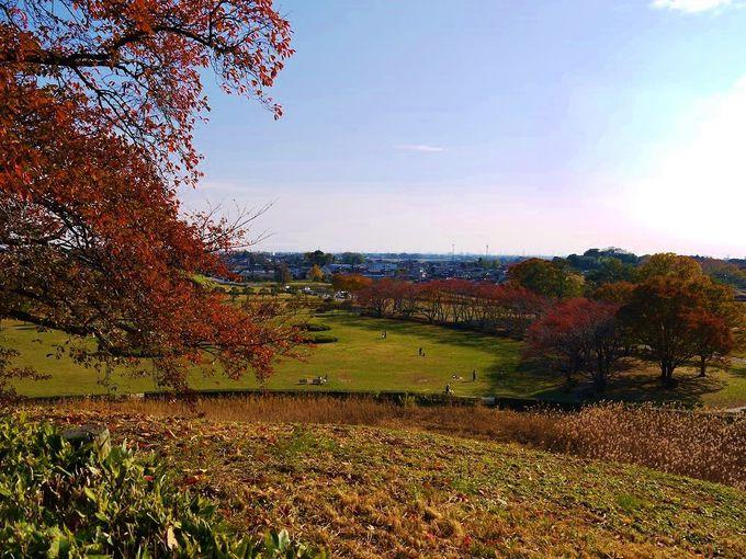 「丸墓山古墳」墳上から眺める秋景色