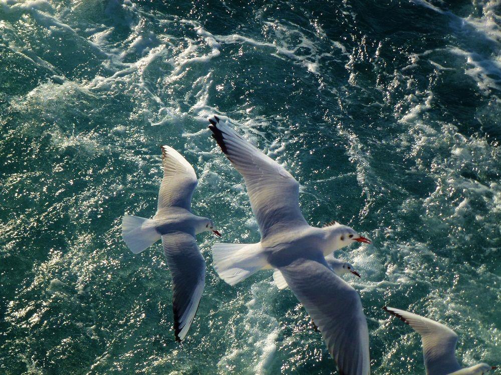 冬の「清水港内ベイクルーズ」のお楽しみ!ユリカモメとのふれあい