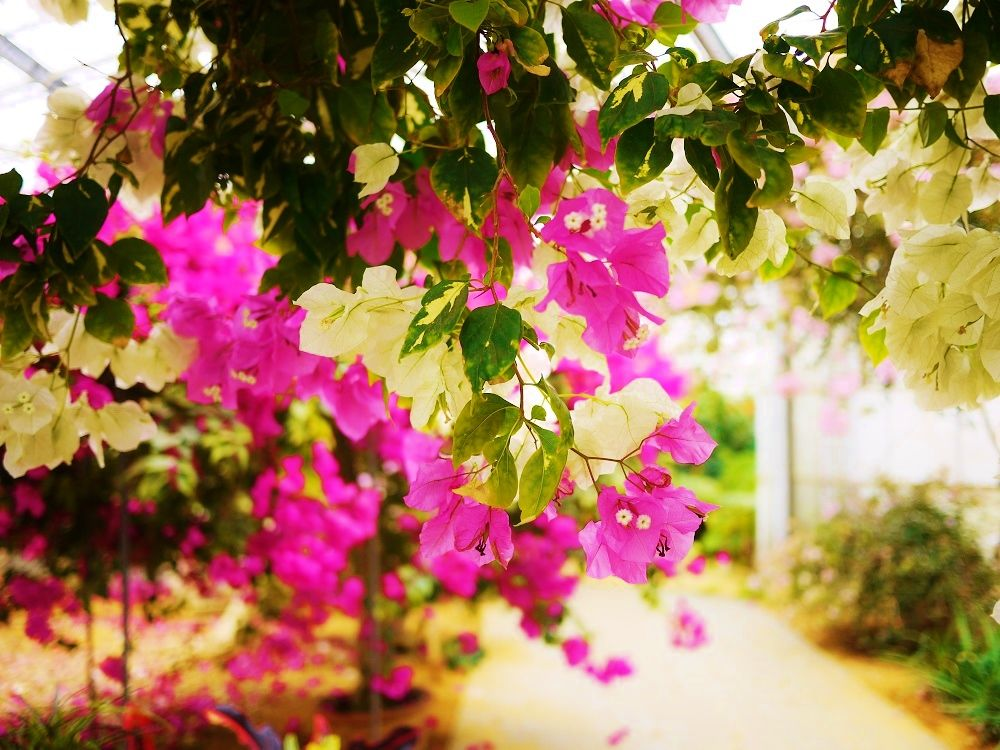 絶品スイーツと花の楽園「観光農園ユートピアファーム宮古島」