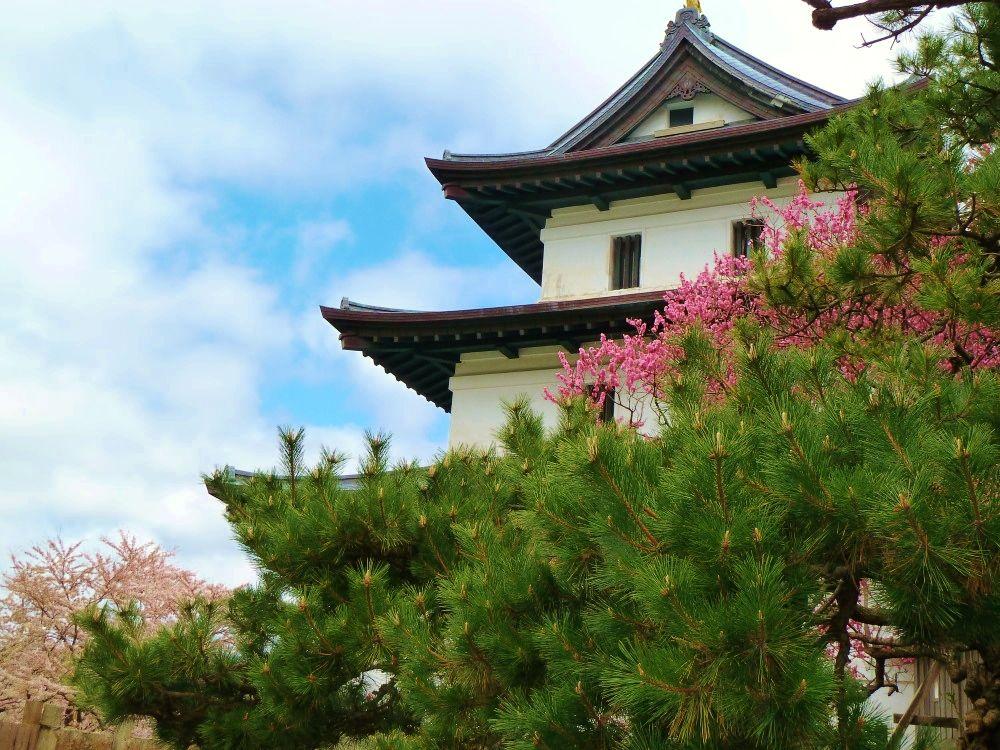 日本最後の和式城郭「松前城」は花々に囲まれた美しい城