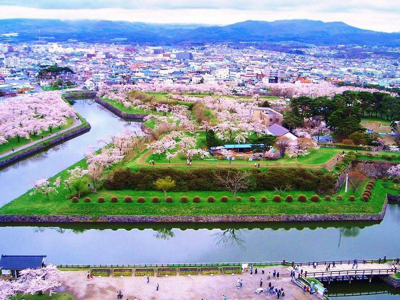 春色に染まる星型城郭!お花見は桜花咲く函館市「五稜郭公園」へ