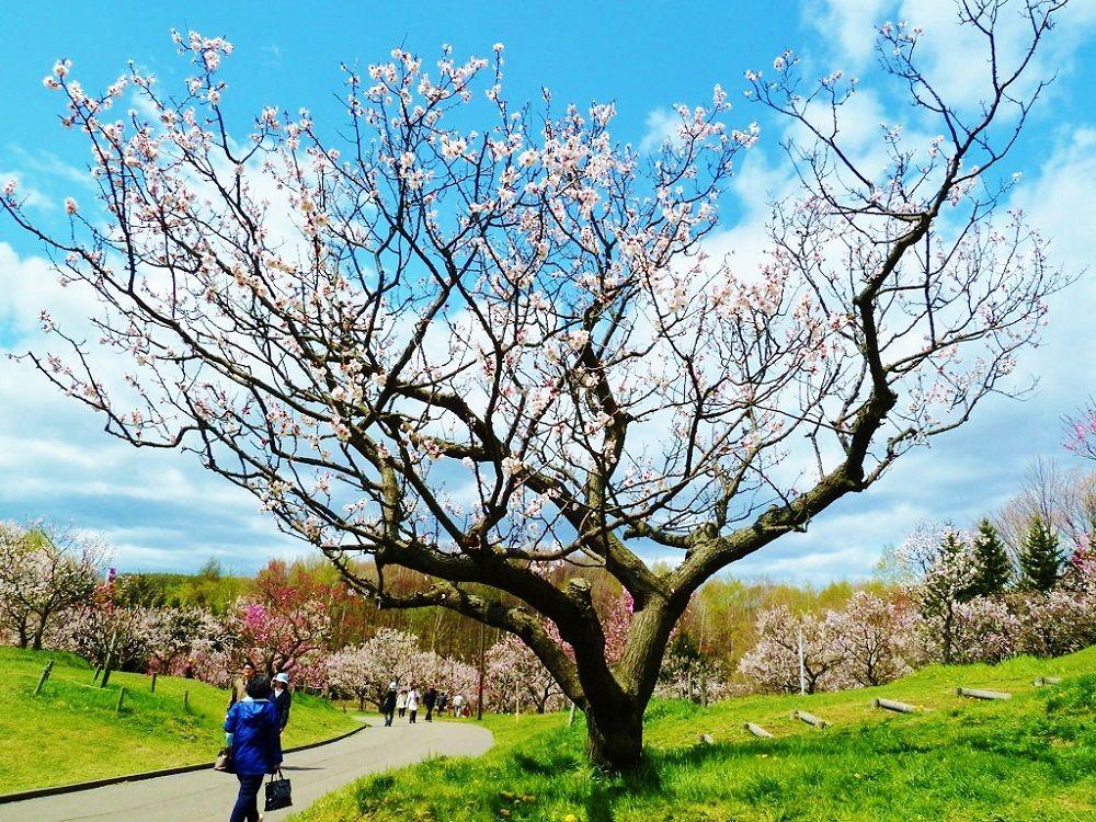 「平岡公園」は別名「梅林公園」とも呼ばれる梅の名所