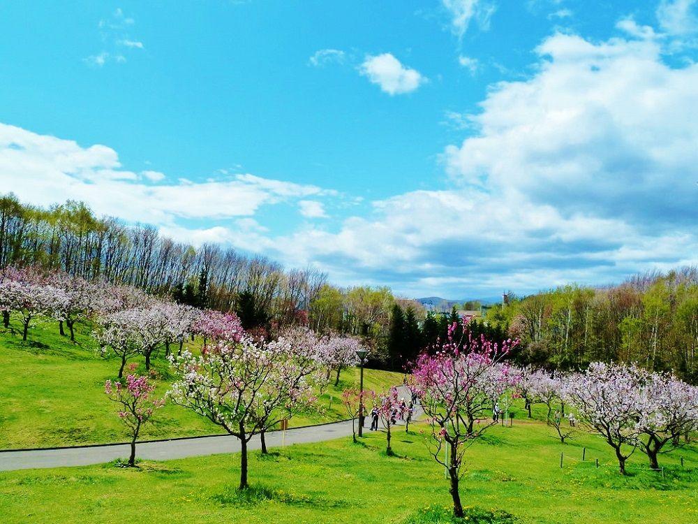 自然いっぱいの「平岡公園」に広がる梅と春紅葉の共演