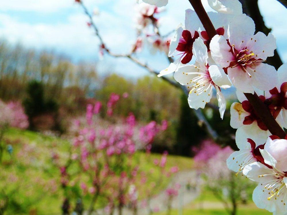 梅だけじゃないんです…「平岡公園梅林」を彩る花々