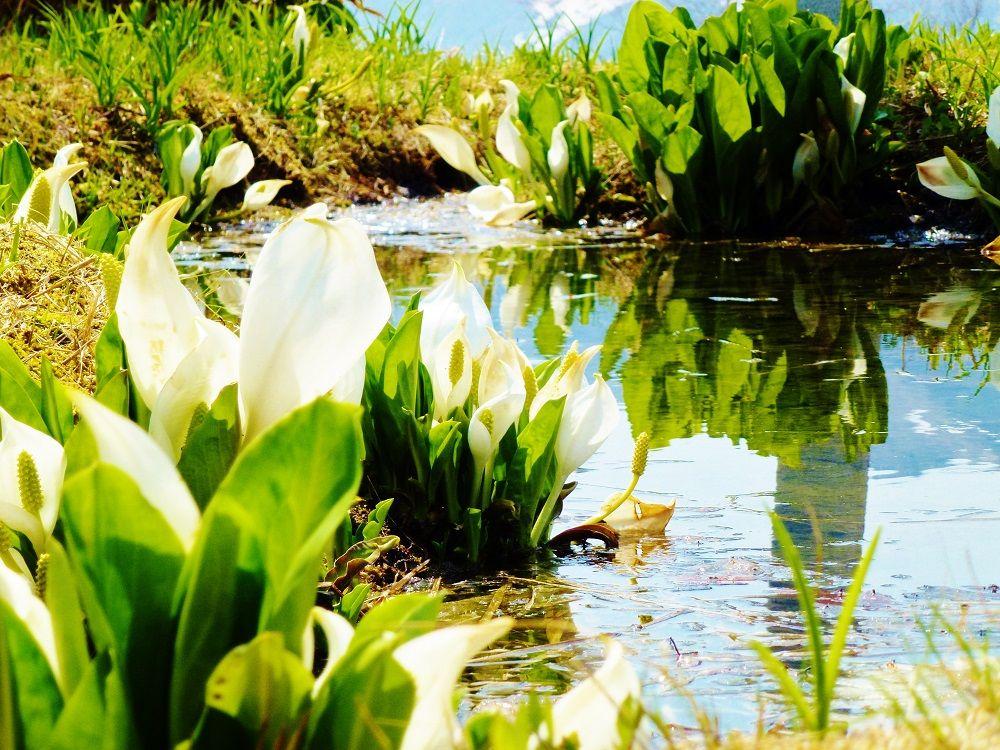 大自然がすぐそこにあるから四季が美しい「水上温泉郷」