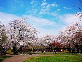 子連れファミリーにオススメ!桜咲く春の札幌市「農試公園」