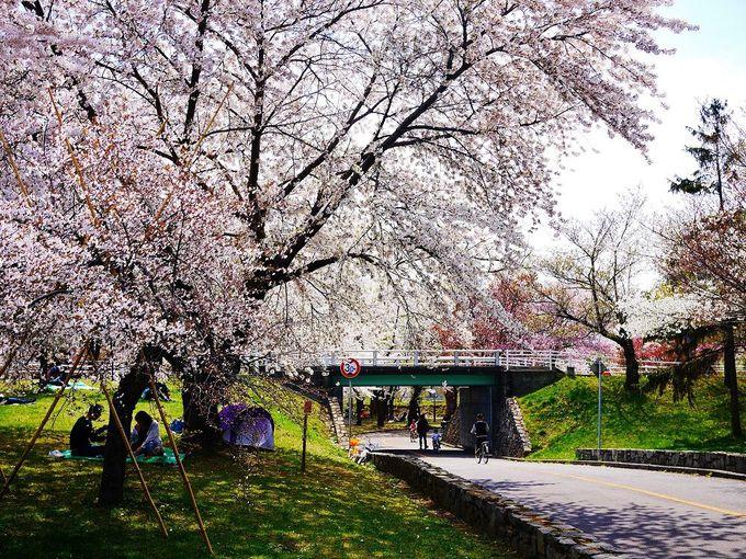 ここは子供達の学び場!桜咲く「農試公園」で自転車デビューをしよう!