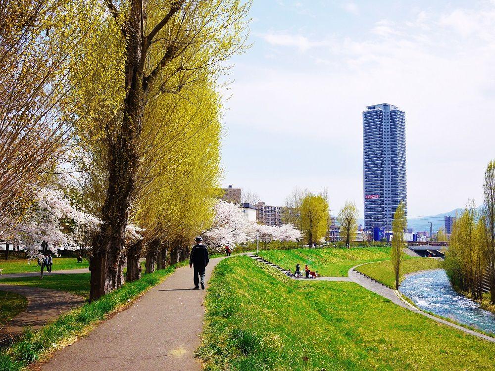 川のせせらぎを聞きながら桜咲くポプラ並木を歩こう!