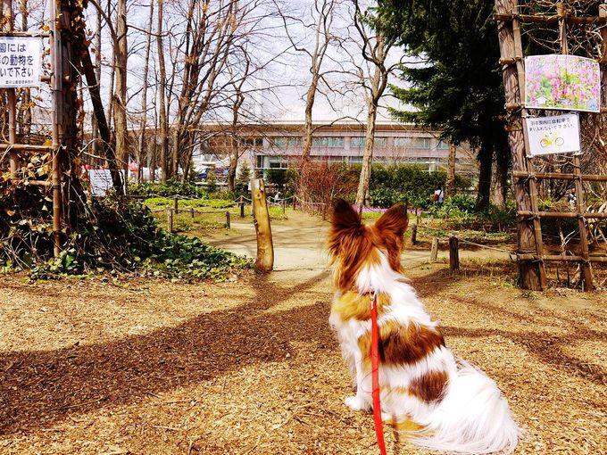 カタクリ咲く「豊平公園」野草園へ行こう!