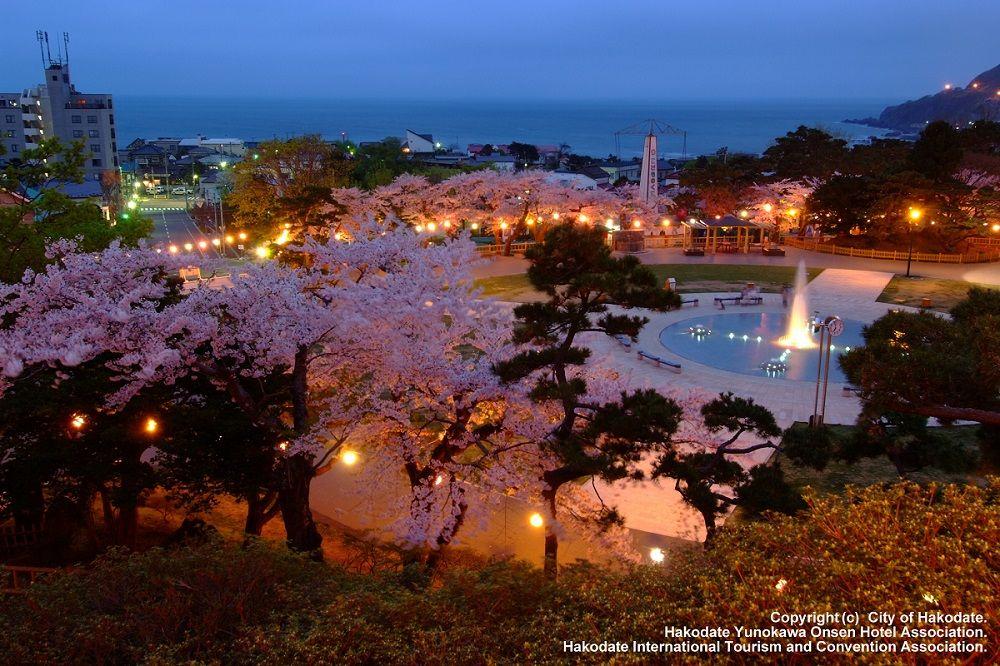 夜桜も美しい「函館公園」