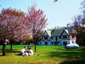 桜梅、花々彩る春色庭園でお花見!札幌市「北海道知事公館」