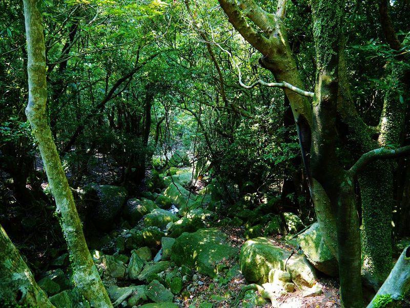 屋久島西部絶景スポット&世界遺産の中を通り抜ける西部林道