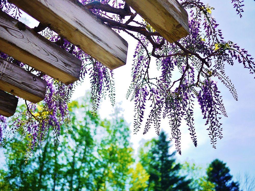 北海道の春は次々に咲く花々が魅力!豊平公園で見る季節の移り変わり