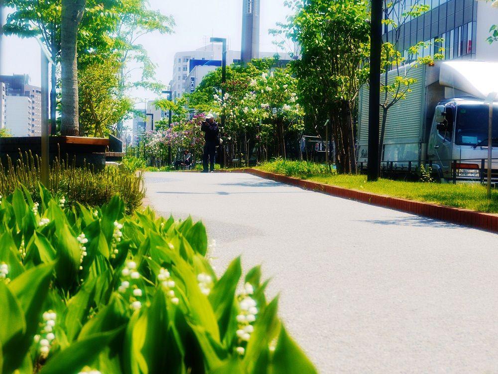 ライラックの新名所「創成川公園」は花と水辺の散歩道