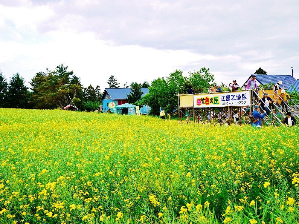 「幸せ色の丘」広がる滝川市江部乙地区