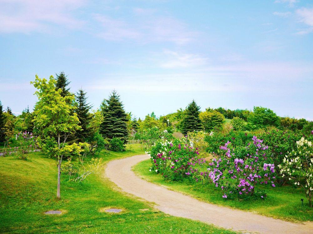 美しいライラックの森を歩こう