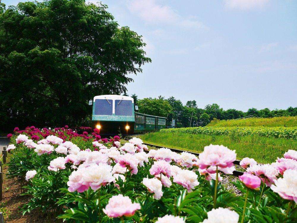 芍薬のお花畑美しい「百合が原公園」を走るリリートレインのお話