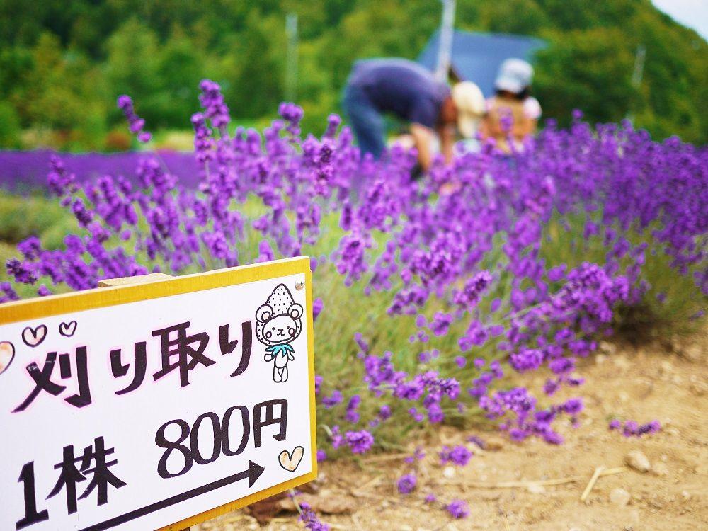 10.「幌見峠ラベンダー園」紫の絨毯/北海道