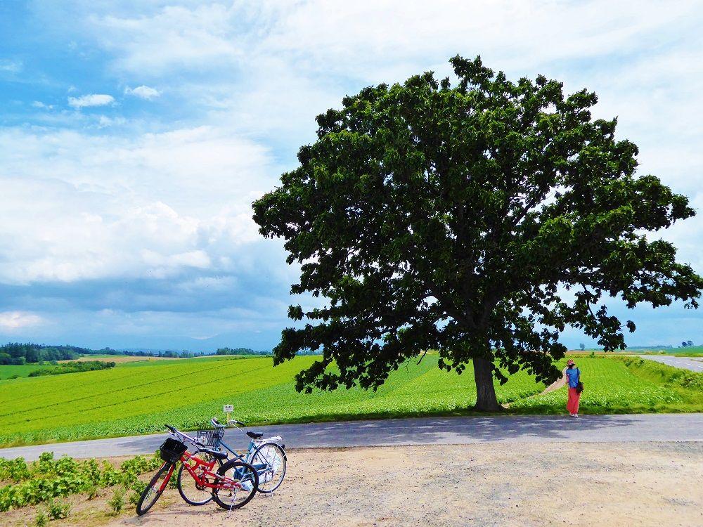 10.北海道旅行のツアーはどう選ぶ?