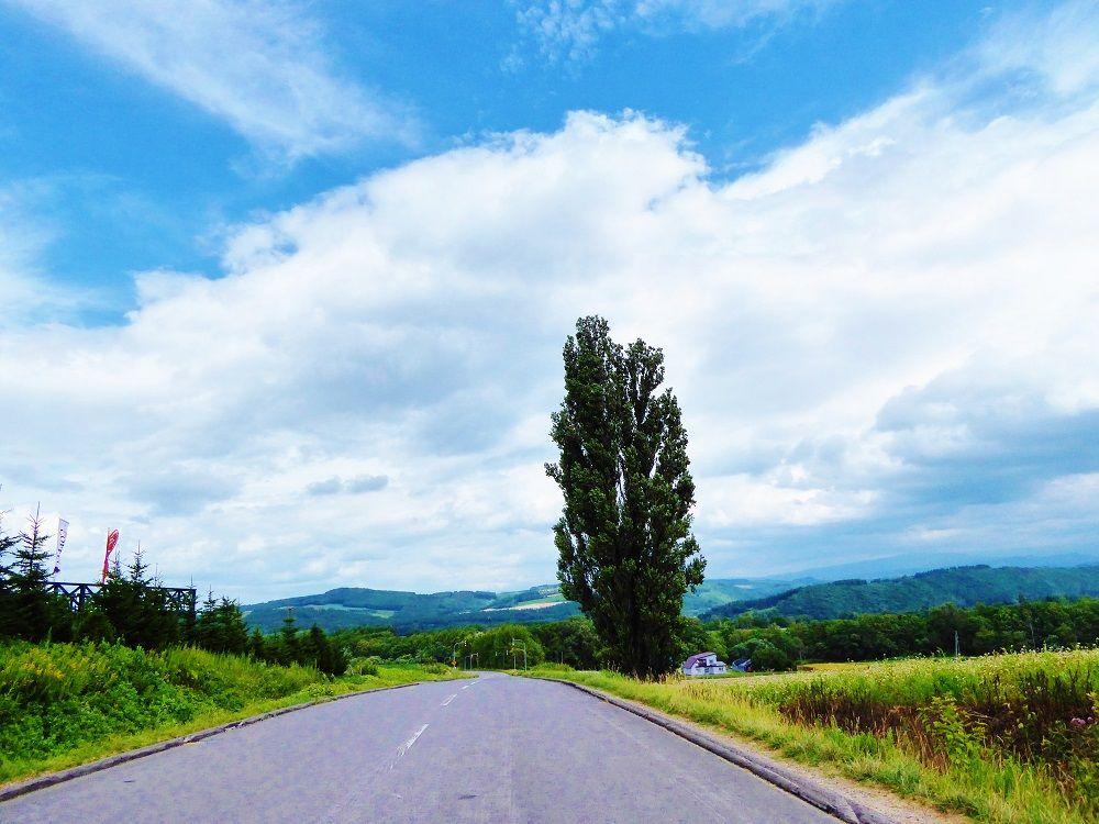 美瑛の丘にたたずむ「ケンとメリーの木」に会いに行こう!