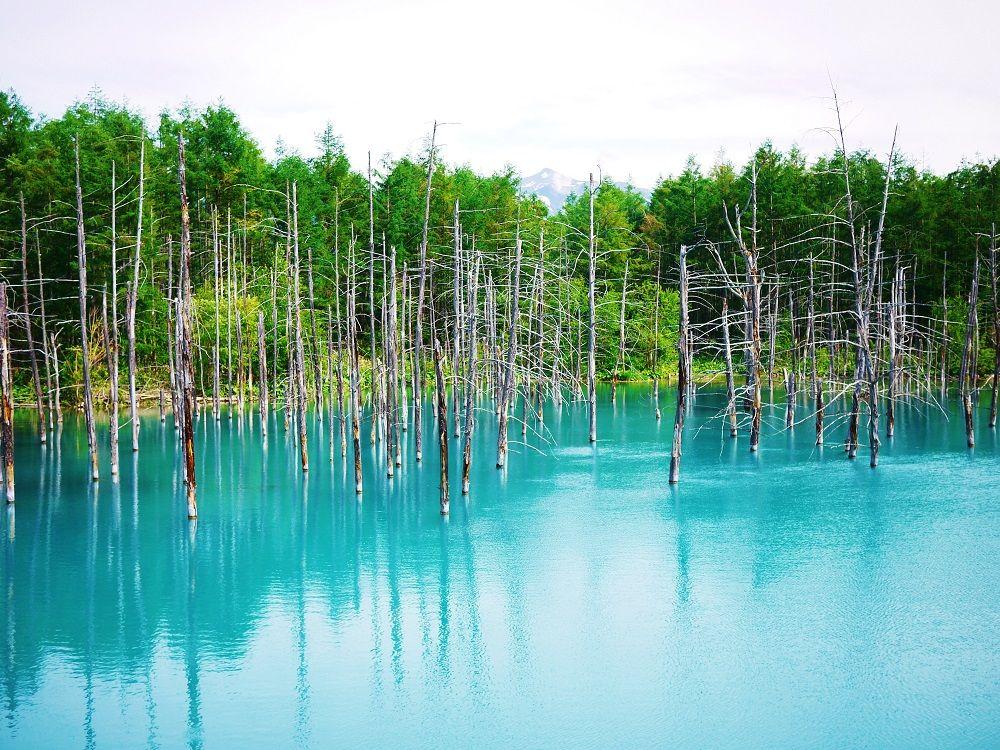 「白金 青い池」平成生まれの観光名所