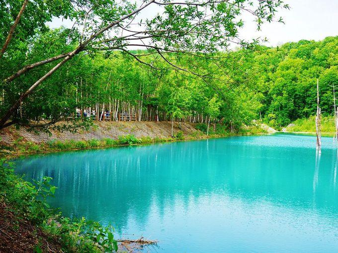 「白金 青い池」をぐるっと囲む遊歩道から見える様々な景色