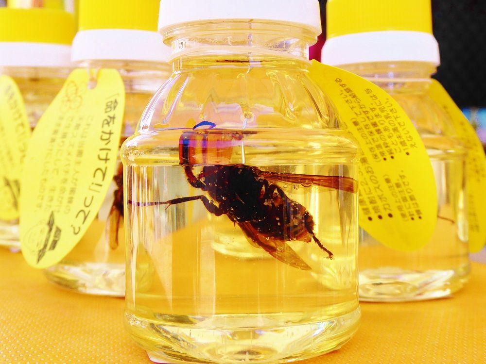 番外編!「ハニーショップ軽井沢」にはインパクト最大のハチミツが!
