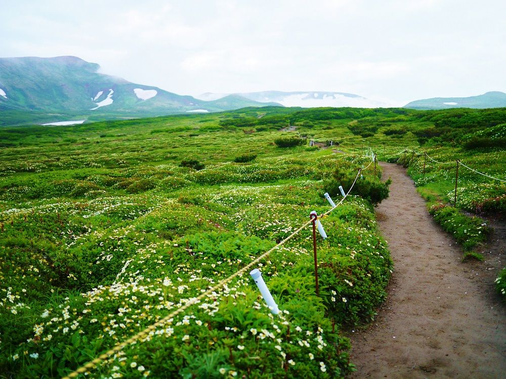 大自然!「黒岳石室」周辺に広がる天空のお花畑