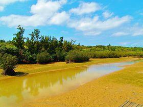 宮古島の植物観察をしよう!島尻・川満2つのマングローブ林
