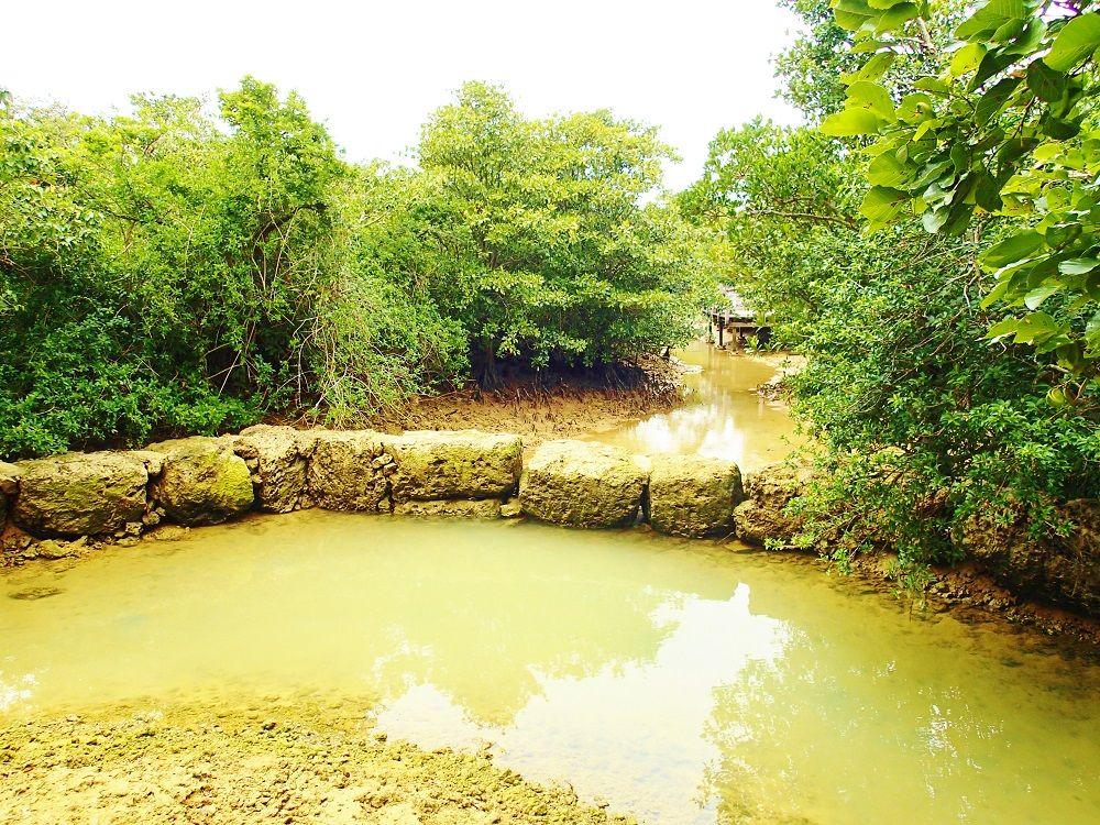 宮古島のパワースポット「川満マングローブ林」