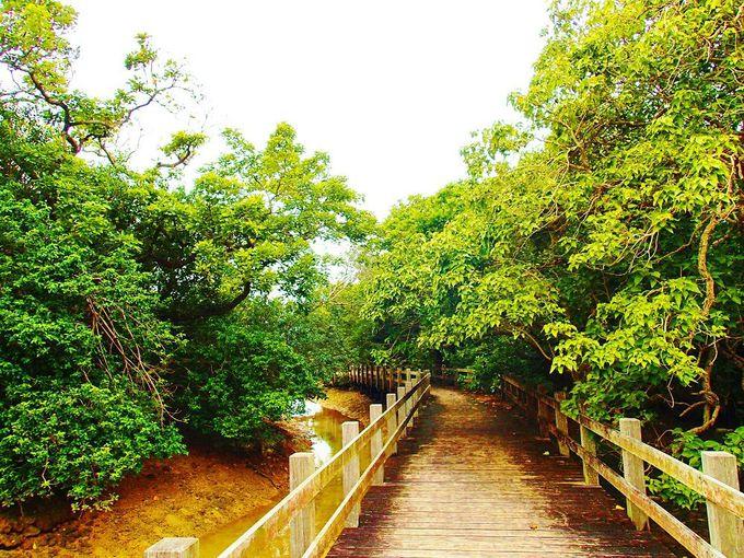 「川満マングローブ林」はゆっくり過ごしたい場所