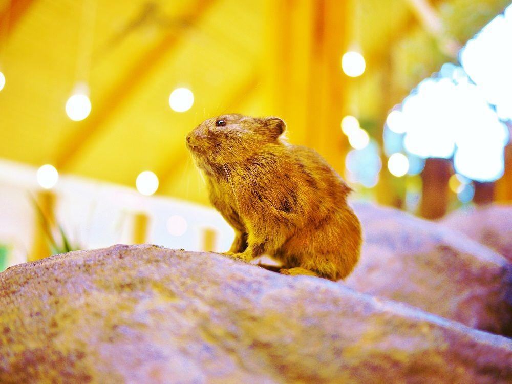 観光情報の拠点「ひがし大雪自然館」は親子で東大雪の大自然を学べる!