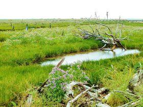 北海道に存在する生と死の世界の歩き方!野付半島トドワラ