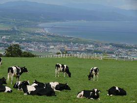 牛さんと一緒に内浦湾を一望!北海道「八雲町乳牛育成牧場」