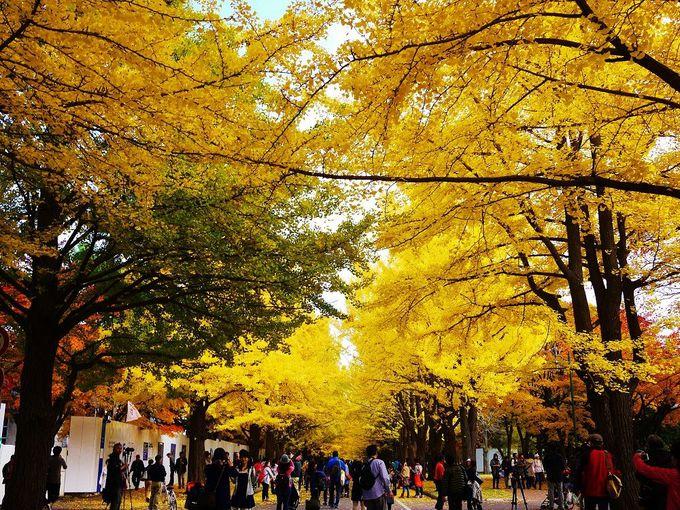 4.北海道大学
