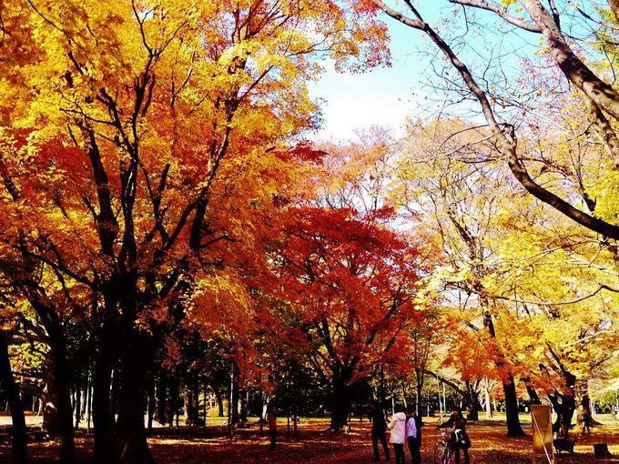 秋は錦色に染まる紅葉の札幌市「円山公園」にでかけよう!