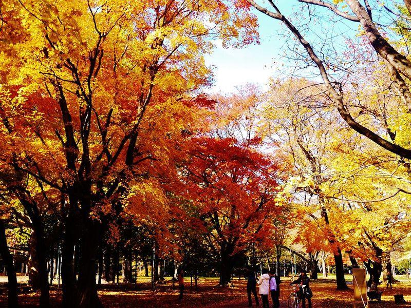 美しき北国の紅葉絵巻に感動!秋の札幌市「円山公園」散歩